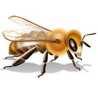 Bees/Wasps